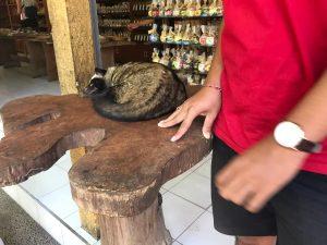 Civeta durmiendo